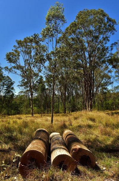 Mulgoa Logs (c)Wildside-Au
