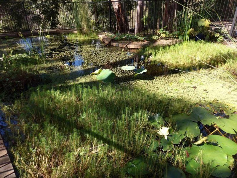 Recent photo of pond